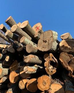 Oak logs at the lumber yard